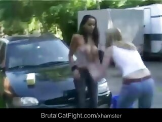 Gato peleas porno